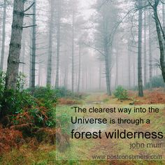 Favorite john muir quotes: the universe and the forest earth Earth Day Quotes, Nature Quotes, Boy Quotes, Family Quotes, Tattoo Quotes For Men, John Muir Quotes, Picture Tree, Forest Pictures, Arbour Day