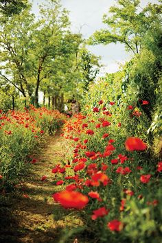 The old footpath - Poppy Lane