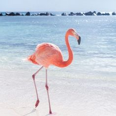Pink Flamingo Wallpaper for iPhone and Android Beautiful Birds, Animals Beautiful, Animals And Pets, Cute Animals, Baby Animals, Jolie Photo, Pink Flamingos, Flamingo Beach, Flamingo Photo