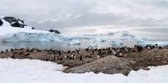 First day off the ship in Antarctica 7 Continents, Day Off, Antarctica, Ocean, Ship, Island, Explore, Penguins, Outdoor