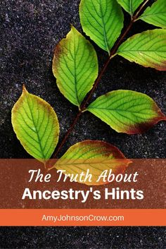 The shaky leaves on Ancestry have limits. Learn how to work around them to find more for your genealogy.