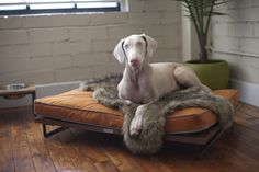 Present day Pet Furniture That Will Search Excellent In Your House