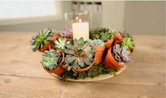 Gorgeous Succulent Centerpiece From Better Homes & Gardens