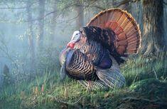 north american wildlife artists | DECOYS AND WILDLIFE GALLERY WILDLIFE ART - PAINTINGS