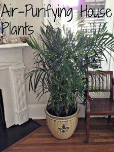 air purifying: Air Purifying Plants: Air Purifying House Plants w - Modern Home Air Purifier, Living Room Decor Inspiration, Inside Plants, Dogs And Kids, Indoor Plants, Indoor Gardening, Purple Flowers, Houseplants, Flower Pots