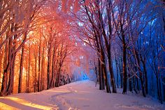 exquisite dawn in a wintery woods