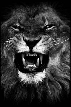Hungry Or Angry ?, photography by Laurent Baheux