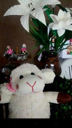 Festa ovelhinha