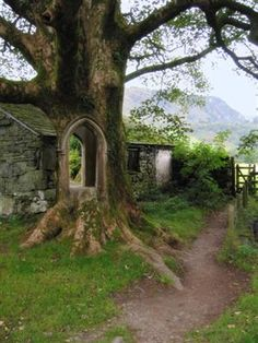 Tree Portal, Ireland   wonder where this leads