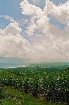 Fields of sugar cane, with the Atlantic Ocean and the eastern coast in the distance, viewed from (probably) Mount Hillaby, St Joseph Parish, highest point in Barbados