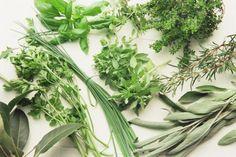 Al otro lado del cristal: Hierbas aromáticas en casa: semillas, plantas, cultivo, recolección