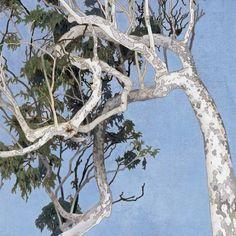 Cressida Campbell eucalyptus