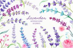 Watercolor Lavender Illustration by Corner Croft on @creativemarket?u=chengjing