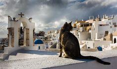 Dramatic cat picture of Santorini Greece, probably Fila