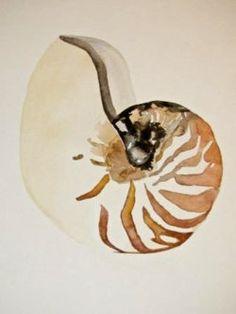 Ocean Seashell by Sarah Storm