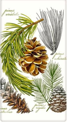 Evergreen Botanical Pine Cones 100% Cotton Flour Sack Dish Towel Tea Towel: