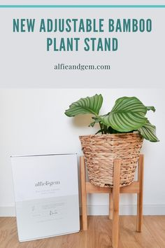 Plant Stand #plant #planting #bamboostand Bamboo Plants, Indoor Planters, Indoor Window Boxes