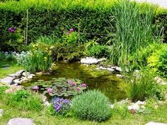 You can use your backyard pond for spending quality family time and have evening tea. The good thing about the backyard pond is that gurgling waterfalls are very much attractive and appealing. So if you haven`t decided on having a pond you must do it now. Ponds For Small Gardens, Fish Pond Gardens, Small Ponds, Backyard Water Feature, Ponds Backyard, Diy Garden Fountains, Outdoor Fountains, Water Fountains, Garden Pond Design