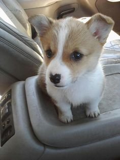 Things that make you go AWW! Like puppies, bunnies, babies, and so on. A place for really cute pictures and videos! Really Cute Dogs, I Love Dogs, Baby Animals Super Cute, Cute Animals, Corgi Dog, Dog Cat, Dog Quotes Love, Cute Animal Photos, Cute Dogs And Puppies