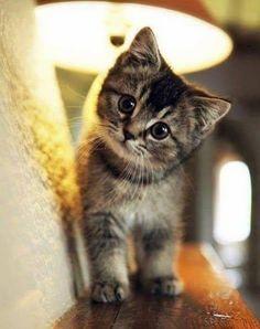 #kitten #kätzchen