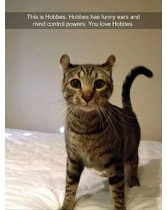 If you have pets at home, you will surely love these hilarious & Funniest animals memes that will make laugh you hard . loL 😀 :p So here are some the best I would say trending funny animal memes, i … Continued Funny Animal Memes, Cute Funny Animals, Funny Animal Pictures, Cute Baby Animals, Animals And Pets, Funny Cats, Funny Memes, Funny Pet Quotes, Animal Pics
