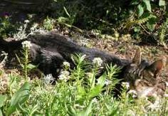 Link to a site that shows you how to create a cat-friendly garden space in the yard.