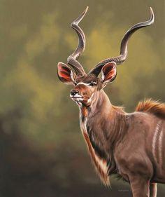 beautiful mammals kudu bull kudu bullYou can find Mammals and more on our website Rare Animals, Zoo Animals, Animals And Pets, Pretty Animals, Animals Beautiful, African Antelope, Tier Fotos, African Animals, Fauna