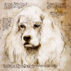 """American Cocker Face"" Detail of a Da Vinci style drawing #pets #dogs"
