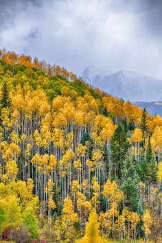 Fall colors along the Million Dollar Highway, Ouray, Colorado