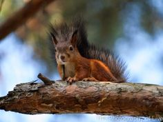 The Photography of Live: Squirrels and Nuts