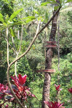 Bali, Indonesia, jungle in Ubud, www.worldlytreasury.com