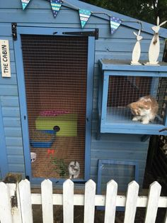 Accommodation - The Warren Bunny Boarding #catsdiyenclosure Bunny Sheds, Rabbit Shed, Rabbit Run, House Rabbit, Rabbit Hutch Plans, Rabbit Cages, Rabbit Toys, Rabbit Hutches, Bunny Rabbit