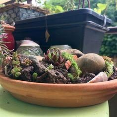 Jardin alpin miniature