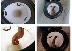 India toilet....ACK!!!