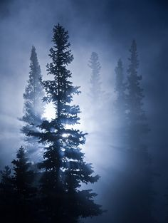 Sylvan Silhouettes - Sunrise by the Bow River, Banff National Park, AB, Canada.