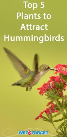 Women Owned Backyard Glory Hummingbird Swing