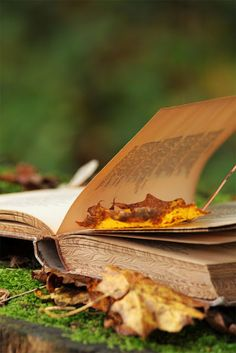 leaves falling into leaves of an old book