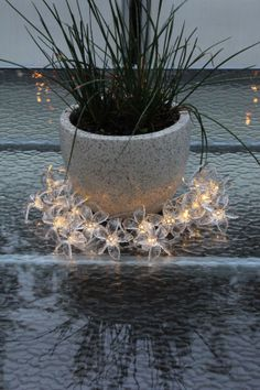 Solar-power pretty flower fairy lights around plant Flower Fairy Lights, Solar Fairy Lights, Pretty Flowers, Solar Power, Fountain, Gazebo, Deck, Outdoor Decor, Garden