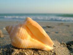 Beach on Sanibel Island, West Coast of Florida