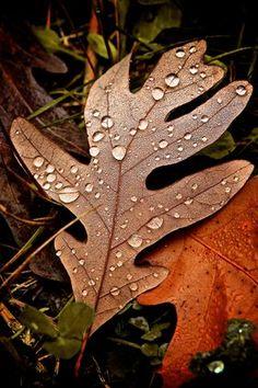 Autumn Air | 500px Prime