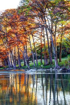 Cypress along the Guadalupe ~ Texas Hill Country // The Guadalupe River runs through the heart of Texas Hill Country, always ready to be the subject of great travel photography.