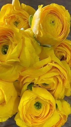 Rose Like Flowers, Flowers For Sale, Burgundy Flowers, Fresh Flowers, White Flowers, Beautiful Flowers, Ranunculus Wedding Bouquet, Ranunculus Flowers, Wedding Flowers