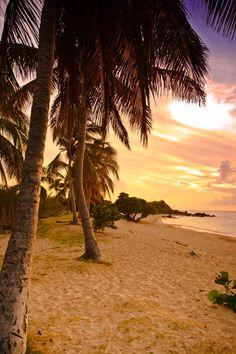 Palm sunset, Happy Bay, St. Maarten.  ASPEN CREEK TRAVEL - karen@aspencreektravel.com (by silverdragon)