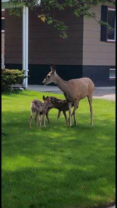 Family living Animals Beautiful, Kangaroo, Giraffe, Nature, Cutest Animals, Felt Giraffe, The Great Outdoors, Mother Nature, Scenery