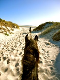#happiness is riding a horse in the sand Noordhoek Beach Ride, Cape Town