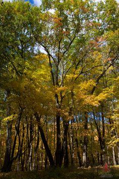 #devilslake #wistatepark #nature #naturephotography #photography #trees #fallleaves #punchkinentertainment