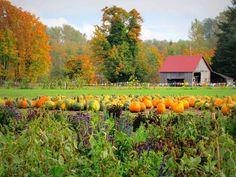 Pumpkin Patch, Nisqually WA   Photo Credit- Ann D'Angelo Photoart