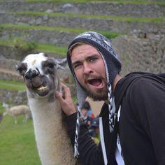 This llama who has nailed the Insta game: