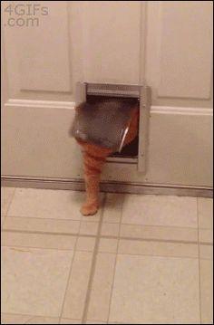 Die Katze nach Weihnachten :) | Lustige Bilder, Sprüche, Witze, echt lustig