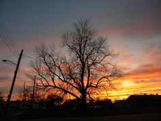 SUNSET, THE OLD PECAN TREE IN JENNINGS